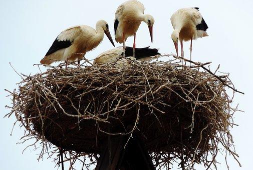 Rust, Lake Neusiedl, Stork, White Stork, Nest