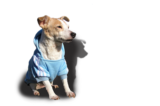 Doggy, Dog, Jack Russell, Terrier, Pet, Cute, Sweet