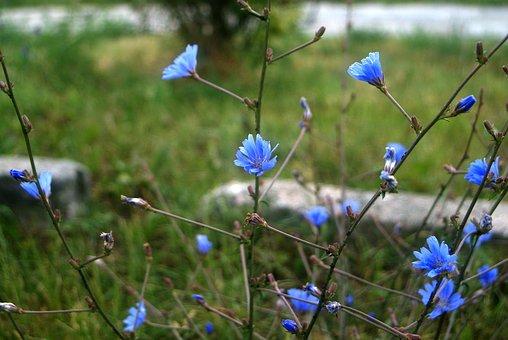 Blue, Flowers, Picture, Beauty, Beautiful, Flower