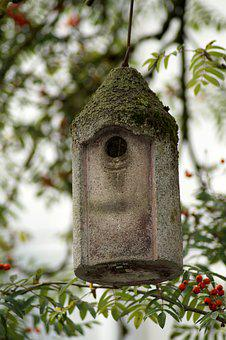 Bird Feeder, Tree, Aviary, Feeder, Rowan