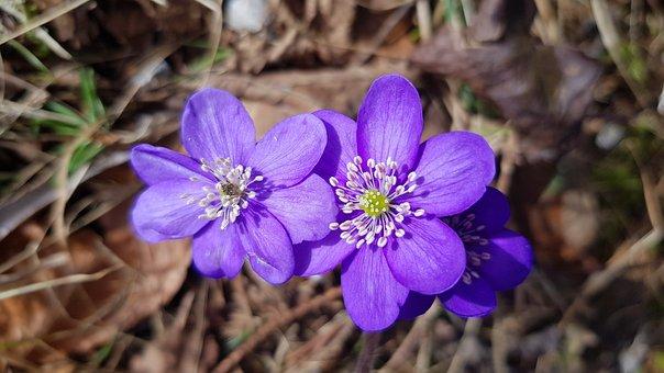 Flowers, Spring, Plant, Petals, Pink, Botanical, Season