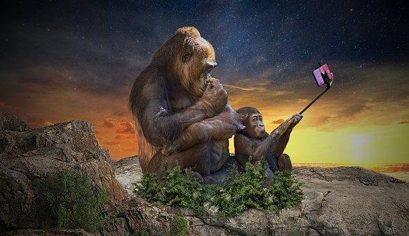 Monkey, Selfie, Camera, Vacations, Summer, Photography