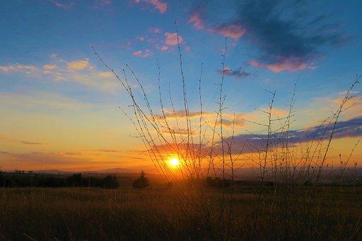 Herbs, Sunset, Nature, Sky, Plant, Solar, Flower