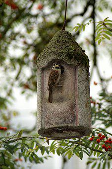 Sparrow, Bird, Bird Feeder, Aviary, Rowan