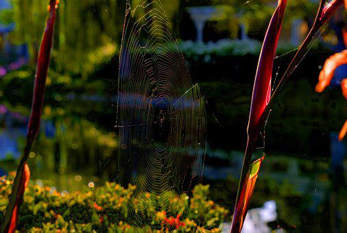Spiderweb, Nature, Web, Pattern, Trap, Insect