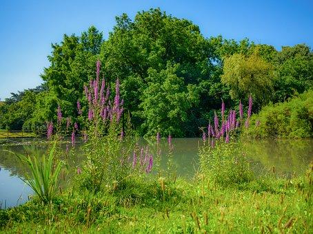 Park, Lake, Forest, Morning, Sunshine, Landscape