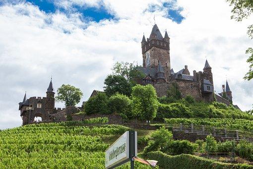 Vineyard, Castle, Winegrowing, Vines