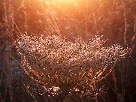 Grass, Evening, Sun, Sunset, Colors, River, Water