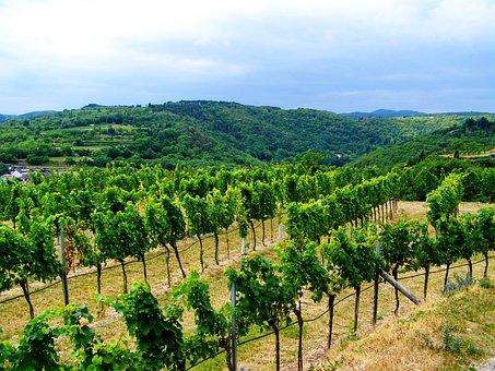 Landscape, Vineyard, Wine Region