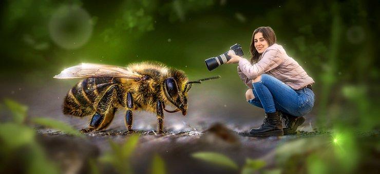 Fantasy, Macro, Bee, Woman, Camera, Peaceful
