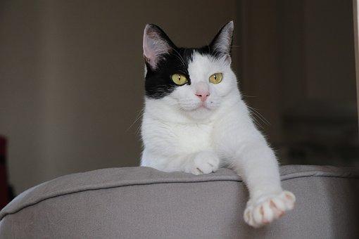 Cat, Pet, Cat's Eye, Animal, Predators