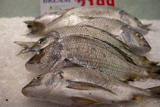 Fish, Market, Food, Fresh, Seafood, Eat, Animal