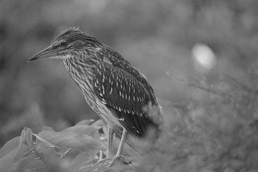 Bird, Plumage, Nature, Animal, Feather, Animal World