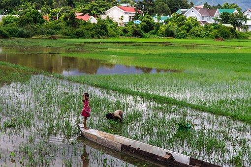 Rice Paddy, Kids, Water, Asia, Vietnam