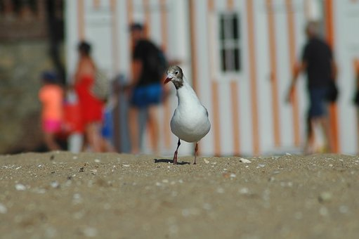 Bird, Beach, Water, Sea, Seashore, Nature, Wildlife