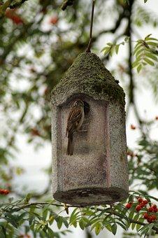 Sparrow, Bird, Bird Feeder, Aviary, Rowan