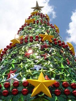Christmas Tree, Public Tree, Christmas, Festive