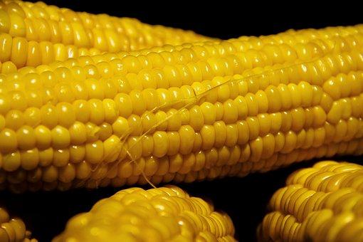 Corn, Vegetable, Nutrition, Fresh, Harvest, Healthy