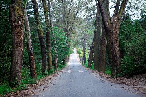 Avenue, Gil, Landscape, Street, Fall Road, Scenery