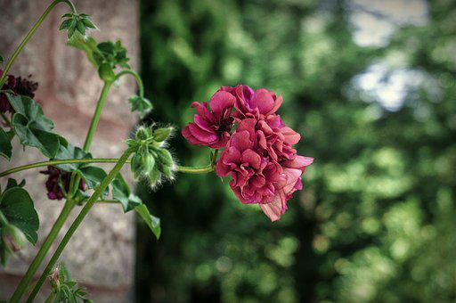 Nature, Flowers, Garden, Spring, Petals, Flora
