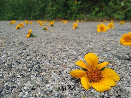 Flower, Road, Summer, Forest, Spring, Plant, Nature
