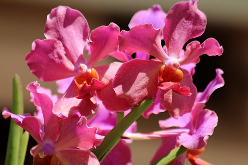 Orchid, Flowers, Plant, Nature, Bloom, Handsomely
