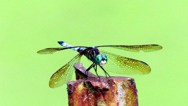Insect, Dragonfly, Wings, Blue, Green, Small, Creature