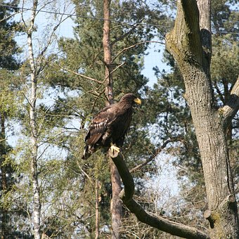 Eagle, The Scandinavian Wildlife Park, Kolind, Aarhus