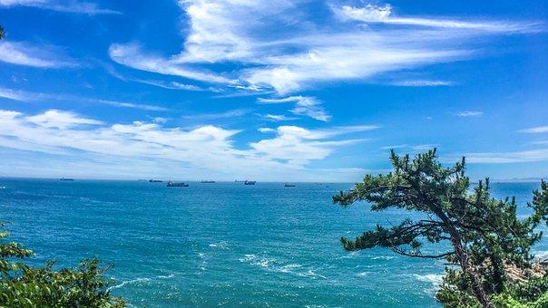 Sea, Pine, Sky, Landscape, Water, Blue, Coastal, Prices