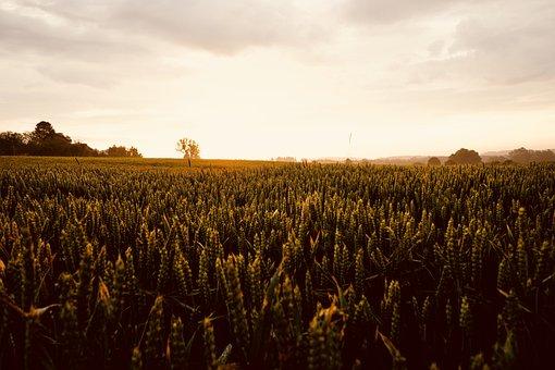 Agriculture, Farm, Harvest, Field, Landscape