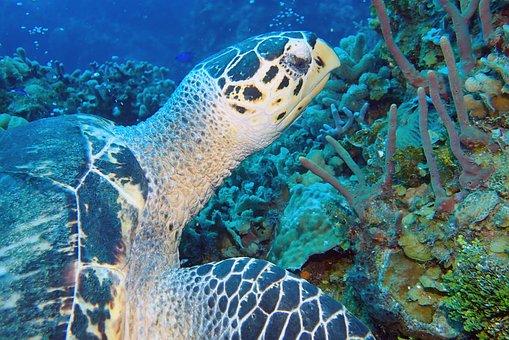 Turtle, Underwater, Photography, Marine, Life