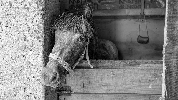 Horse, Animals, Mane, Nature, Stallion, Horse Stable