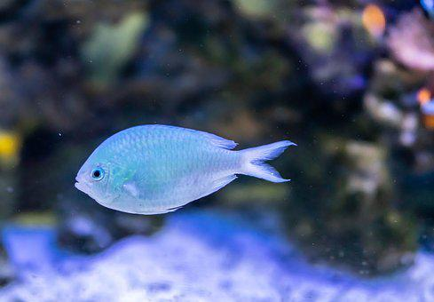 Blue Fish, Close Up, Coral, Underwater, Nature, Exotic