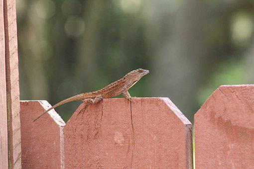 Gecko, Lizard, Nature