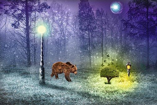Forest, Bear, Wood, Plants, Butterfly, Light, Night