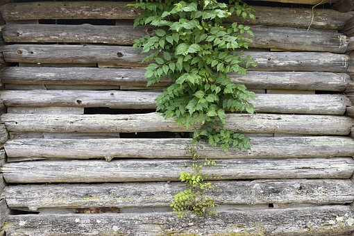Old Wooden Wall, Exterior, Grunge, Log Cabin, Building