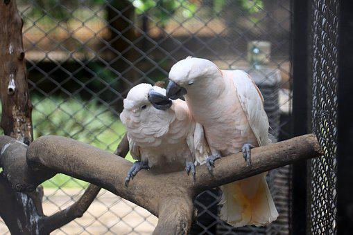 Bird, Indonesian, White, Older Sibling, Wildlife