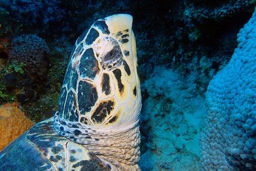 Turtle, Head, Underwater, Photography, Marine, Life