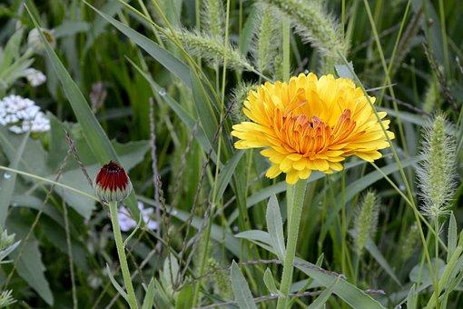 Wild Flower, Blossom, Bloom, Flower, Plant, Flora
