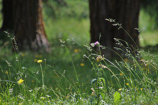 Meadow, In The Forest, Plant, Grass, Flowers, The Idyll
