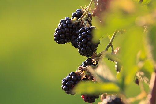 Blackberries, Fruit, Ripe, Healthy, Fresh, Vitamins
