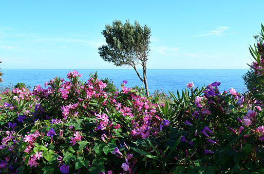 Sea, Plant, Nature, Water, Flower, Plants, Blue