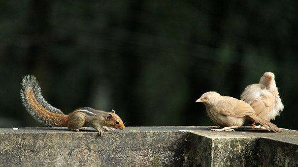 Birds, Avian, Pair, Squirrel, Animal, Wildlife, Nature