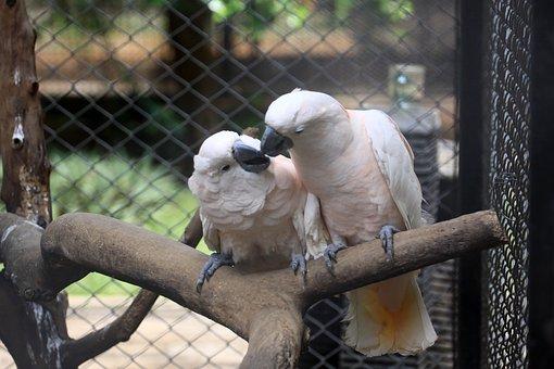 Bird, Indonesian, White, Older Sibling, Wildlife