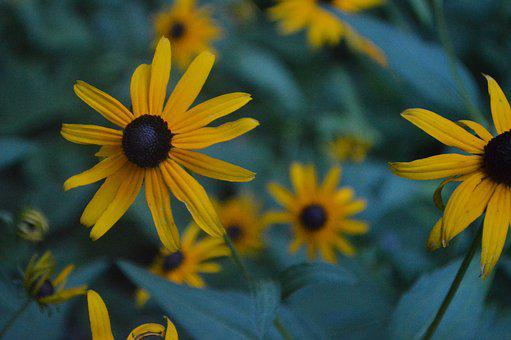Flowers, Yellow Flowers, Nature, Garden, Yellow, Summer