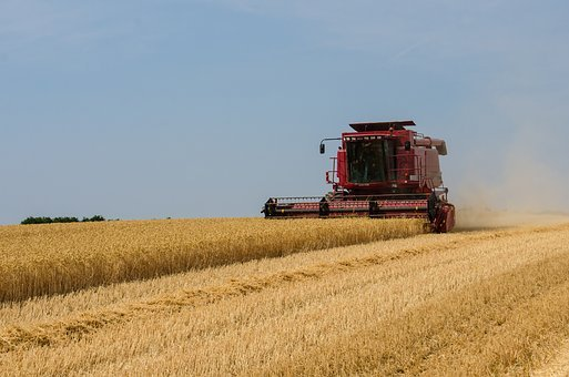 Harvest, Crops, Agriculture, Rural, Farm, Countryside