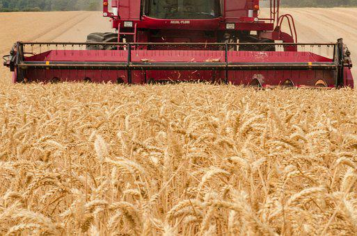Harvester, Tractor, Wheat, Agriculture, Farm, Harvest