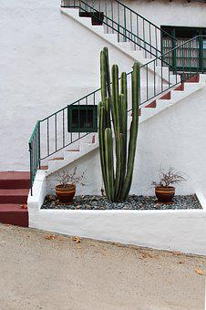 Cactus, Stairs, House Entrance, Plant, Architecture