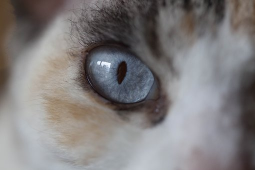 Cat, Eyes, Cat's Eyes, Close Up, Portrait