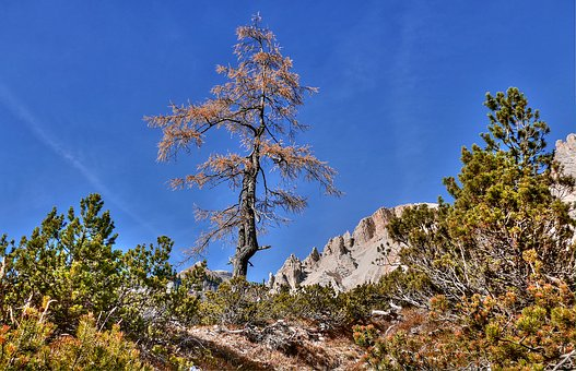 Alta Badia, South Tyrol, Dolomites, Landscape, Nature